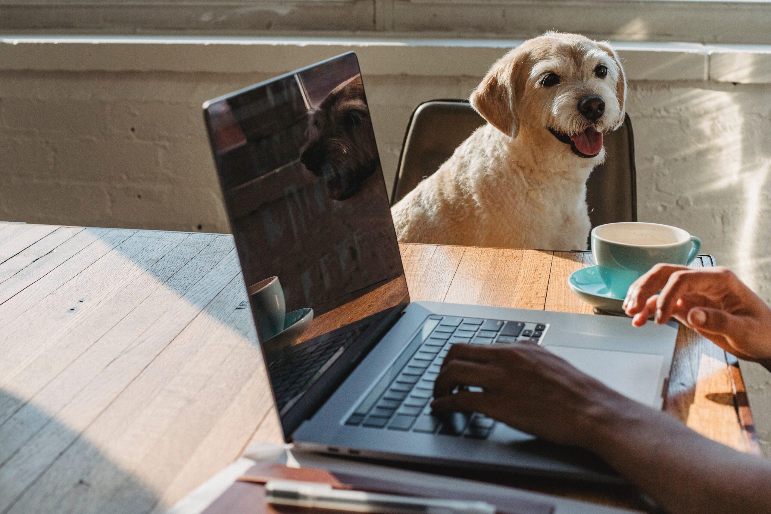 praca przez internet zdalnie w domu